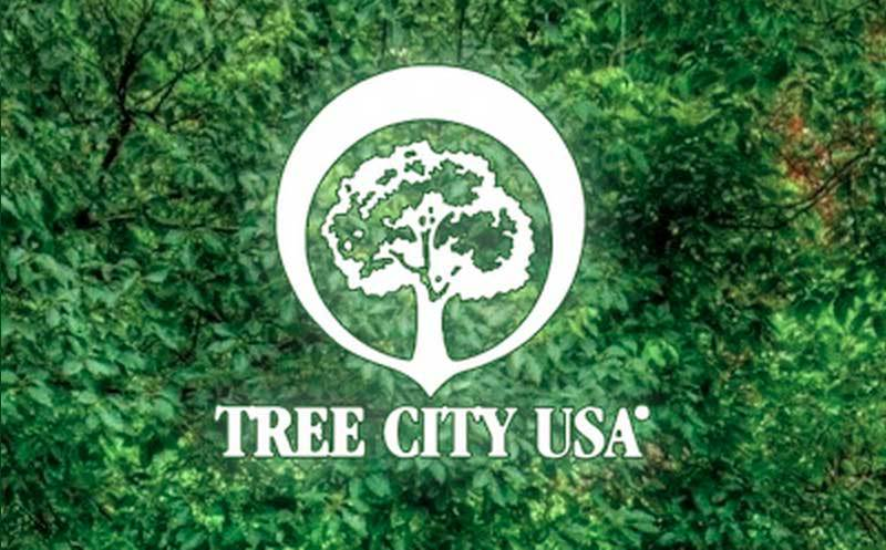 This is a picture of the Tree City USA logo against a backdrop of trees.