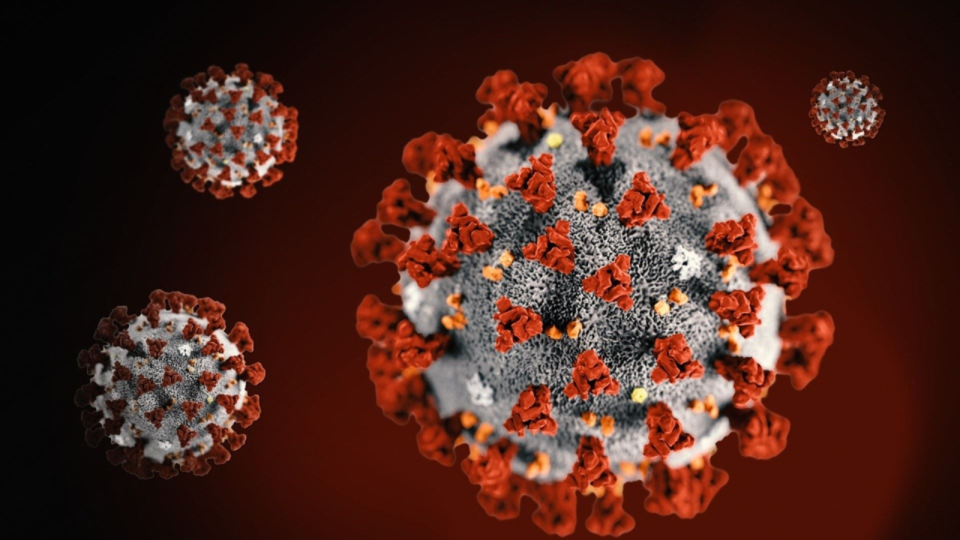 Microscopic Image of COVID-19 Virus